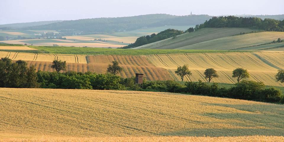 Felder im Weinviertel